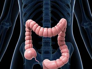 Dieta po zakazeniu clostridium difficile
