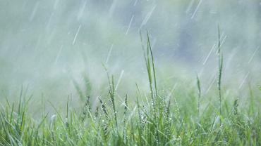 Mikroplastik został wykryty w próbkach deszczu.