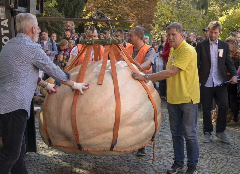 Największa dynia w Polsce