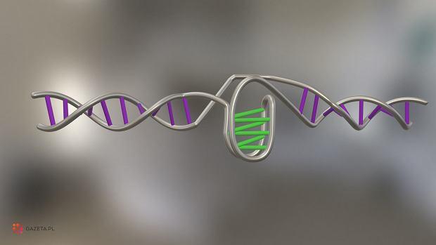 Nowa struktura DNA, którą australijscy naukowcy po raz pierwszy zaobserwowali w żywych komórkach