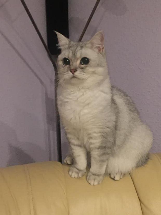Zdjęcie numer 23 w galerii - Karmel, Daktyl, Kapitan Benny, Ptyś, Wiesław... Kochane i piękne - oto Wasze koty [GALERIA NA DZIEŃ KOTA]