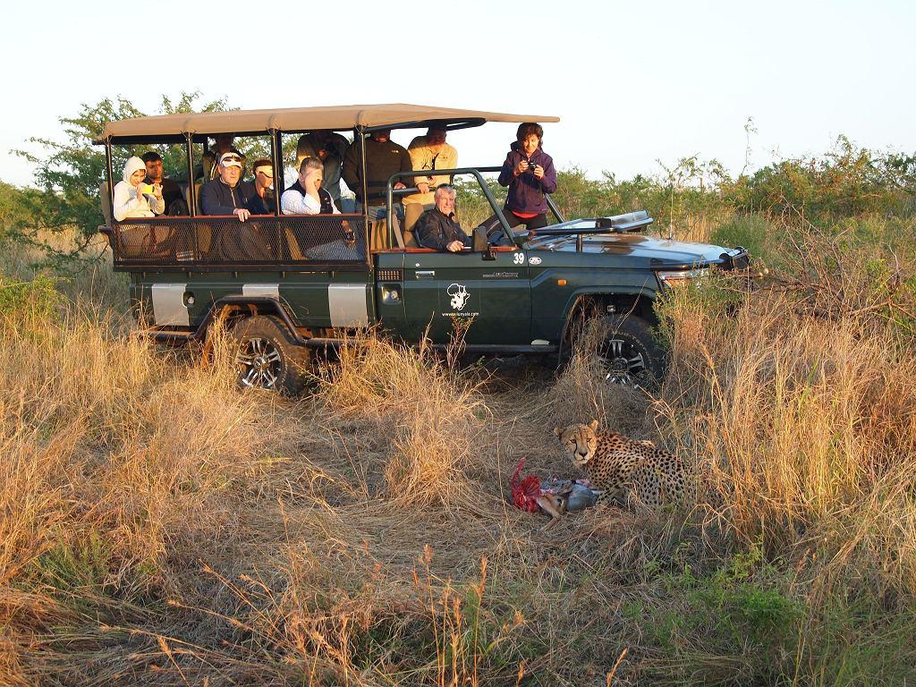 Zastanawiasz Się Nad Wycieczką Na Safari W Afryce To