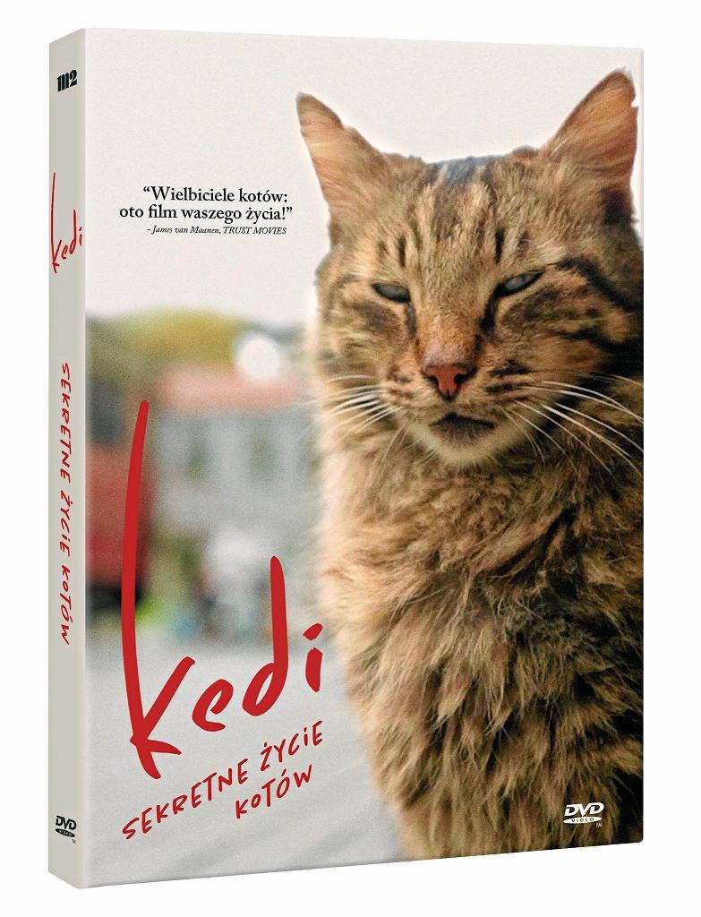 DVD 'Kedi. Sekretne życie kotów', dystr. M2. /