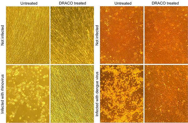 Efekty walki z wirusami widziane przy pomocy mikroskopu