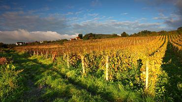 wino, słowacja
