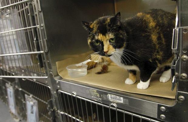 Kotka Willow odnalazła się po 5 latach prawie 3000 km od domu dzięki chipowi.