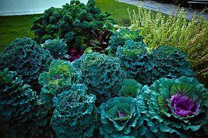 Dekoracyjne warzywa