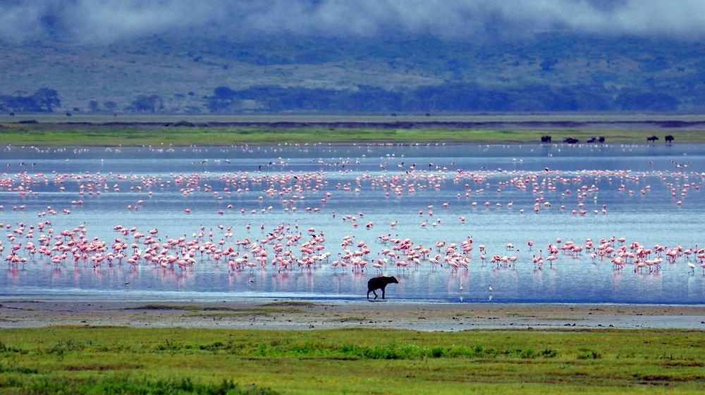 Tanzania safari - Ngorongoro / fot. Shutterstock