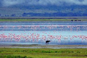 Tanzania safari - informacje praktyczne