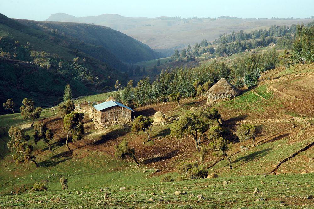 Wycieczka do Afryki - Etiopia. Góry Semien / fot. Shutterstock