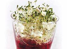Sałatka z kozim serem i sosem malinowym - ugotuj