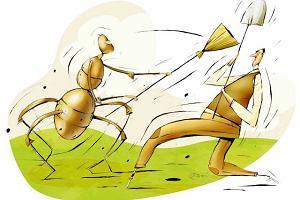 Mrówcza inwazja