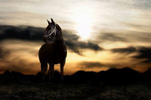 Na koń!