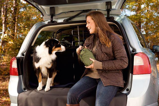 Żeby zwierzak dobrze zniósł podróż, warto go przyzwyczaić do jeżdżenia, zapewnić wygodne miejsce w aucie, wodę do picia i krótkie postoje do wybiegania się