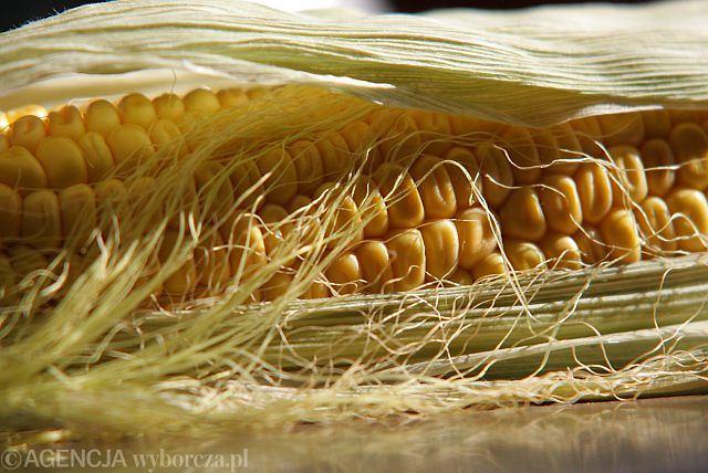 Polska bez GMO? Co rząd zrobił w tej sprawie