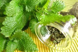 Herbatki ziołowe na najczęstsze dolegliwości -