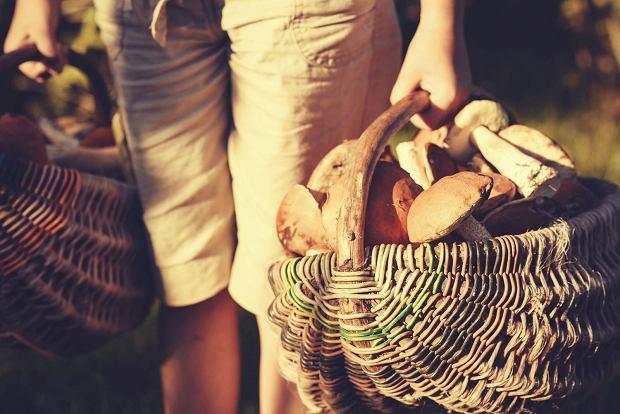 """""""Nie zbieraj ani za starych, ani za młodych. Wykręcaj, zamiast wyrywać"""". Jak zbierać grzyby? Pytamy eksperta"""