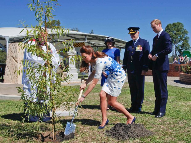 Catherine, the Duchess of Cambridge plants a Plunkett Mallee tree as Prince William (R) watches on, in the Memorial Garden at Royal Australian Air Force Base Amberley near Brisbane, April 19, 2014. Britain's Prince William and his wife Catherine are undertaking a 19-day official visit to New Zealand and Australia with their son George.  REUTERS/RAAF - FSGT Glen McCarthy/Handout via Reuters  (AUSTRALIA - Tags: ENTERTAINMENT ROYALS POLITICS MILITARY)     ATTENTION EDITORS - THIS PICTURE WAS PROVIDED BY A THIRD PARTY. REUTERS IS UNABLE TO INDEPENDENTLY VERIFY THE AUTHENTICITY, CONTENT, LOCATION OR DATE OF THIS IMAGE. FOR EDITORIAL USE ONLY. NOT FOR SALE FOR MARKETING OR ADVERTISING CAMPAIGNS. THIS PICTURE IS DISTRIBUTED EXACTLY AS RECEIVED BY REUTERS, AS A SERVICE TO CLIENTS. NO SALES. NO ARCHIVES