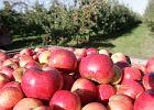Zostały ci obierki po ziemniakach albo skórki z jabłka? Nie wyrzucaj ich! 5 prostych przepisów na przekąski z resztek