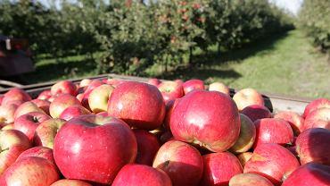Biedronka zapowiada, że od jesieni na półkach sklepu zobaczymy tylko polskie ziemniaki i jabłka