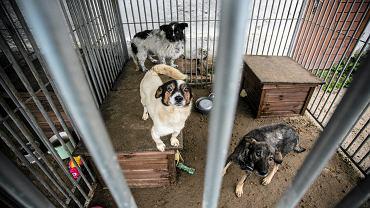 Bezpańskie psy w chorzowskim schronisku Fundacji SOS dla Zwierząt