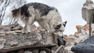 Szkolenia psów ratowniczych na ruinach wyburzonych silosów