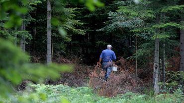 Do Polski od trzech lat przyjeżdżają grzybiarze z Rumunii (zdjęcie ilustracyjne)