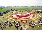 Ułożyli dywan z setek tysięcy tulipanów. To prawdopodobnie jedyna taka impreza na świecie [ZDJĘCIA I WIDEO]