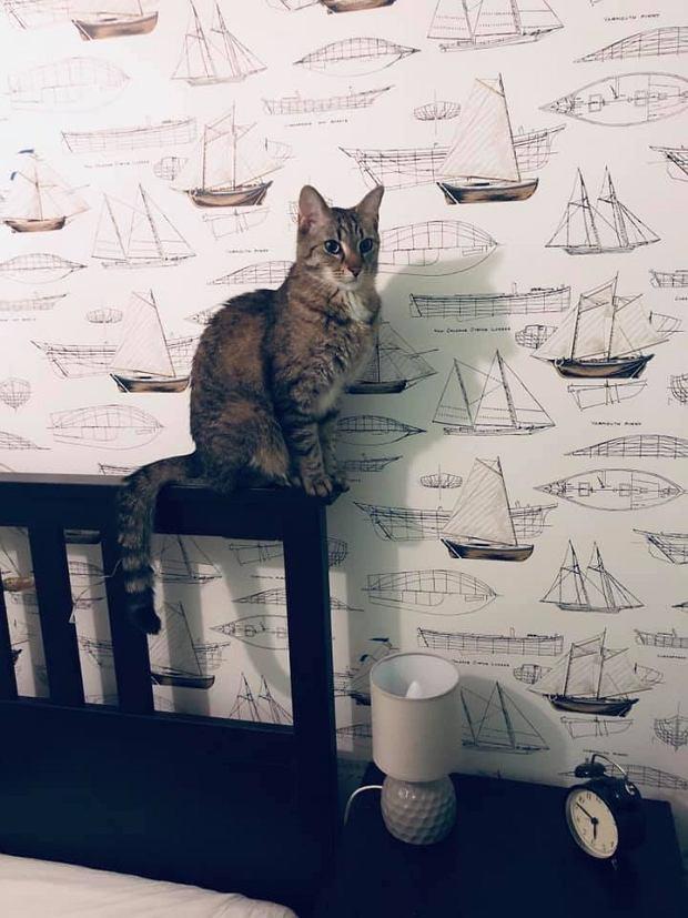 Zdjęcie numer 25 w galerii - Karmel, Daktyl, Kapitan Benny, Ptyś, Wiesław... Kochane i piękne - oto Wasze koty [GALERIA NA DZIEŃ KOTA]