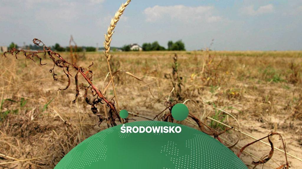 Susza, klimat, pogoda, rolnictwo (zdjęcie ilustracyjne)