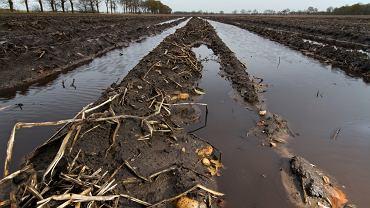 Powódź zniszczyła uprawy.