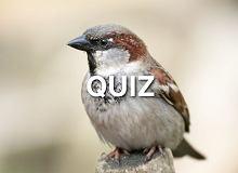 Te ptaki można wypatrzyć w Polsce. Rozpoznasz je na zdjęciu?