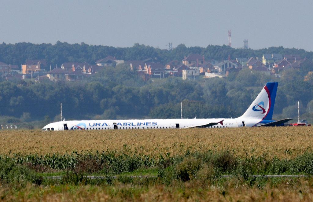 Awaryjne lądowanie airbusa A321 w polu kukurydzy