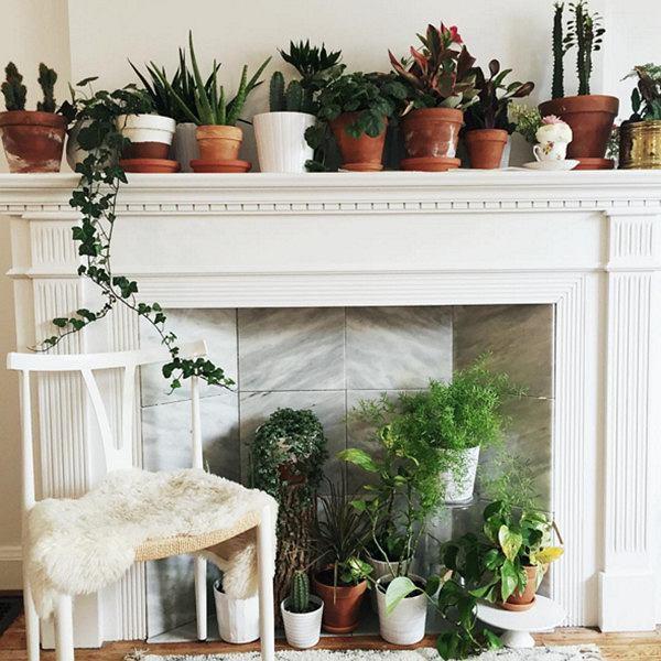 Zieleń w domu - wyjątkowe akcesoria, które odmienią twoje rośliny