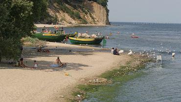 Sinice w Bałtyku (zdjęcie ilustracyjne)