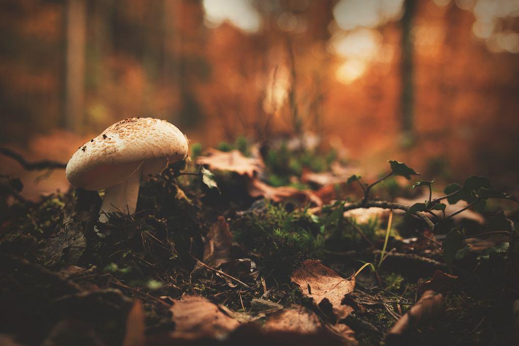 grzyby (zdjęcie ilustracyjne)
