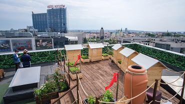 Ule na dachu Galerii Rzeszów