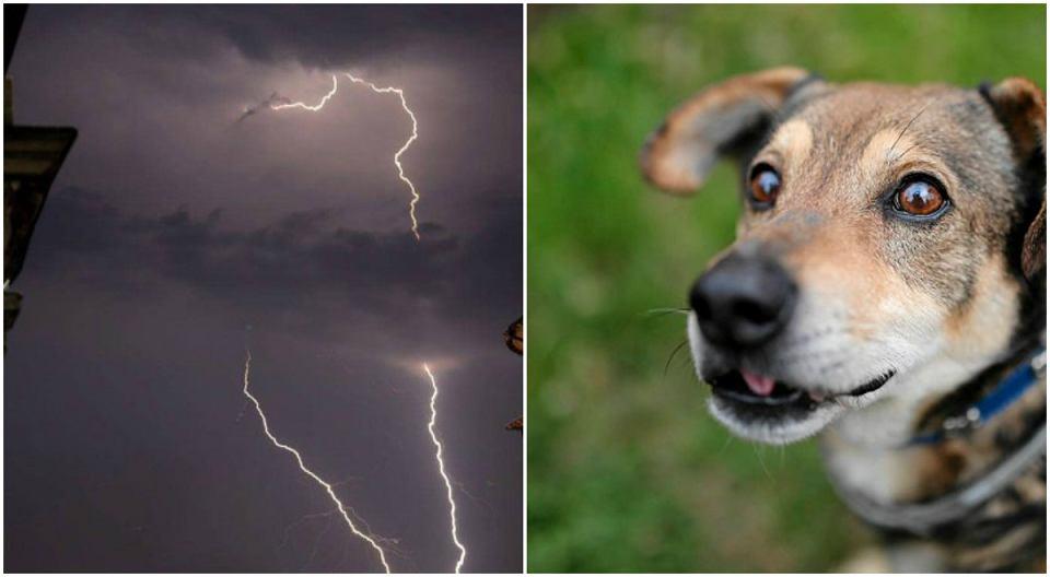 Zdjęcie numer 1 w galerii - Twój pies boi się burzy? Zobacz, jak możesz mu pomóc