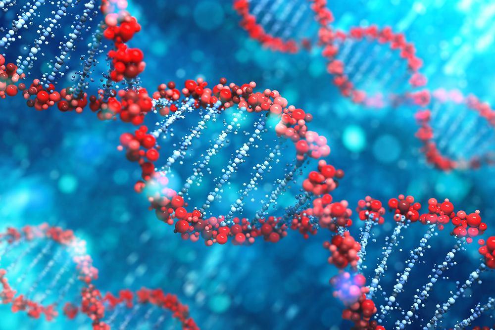 Genom to materiał genetyczny zawarty w podstawowym (haploidalnym) zespole chromosomów