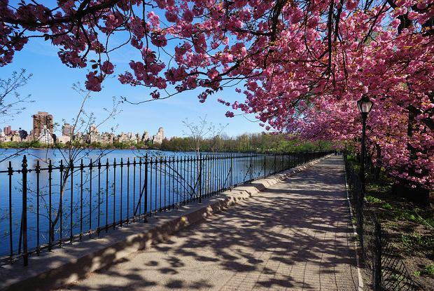 Central Park w Nowym Jorku - to wyjątkowe miejsce, które przyciąga biegaczy jak magnes