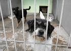 Schronisko dla zwierząt w Bielsku-Białej dostało spadek. 100 tys. dolarów zostanie wydane na lecznicę