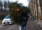 Nadleśnictwo Gdańsk zachęca do samodzielnego wycinania choinek. Za jedno drzewko zapłacisz 40 zł