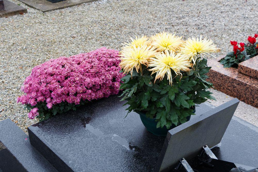 Kwiaty w donicy zamiast wiązanki na Wszystkich Świętych. Zdjęcie ilustracyjne