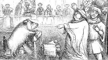 Proces świni oskarżonej o zamordowanie dziecka, 1457 r.