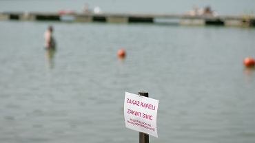 Sinice w Bałtyku. Czym są? Skąd się biorą? Gdzie można się bezpiecznie kąpać? (zdjęcie ilustracyjne)