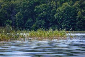 Polska. Krynicznik połyskujący znaleziony w jeziorze. Od 60 lat był uznawany za wymarły