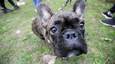 Norwegia: Tajemnicza choroba zabija psy/ zdj.ilustracyjne