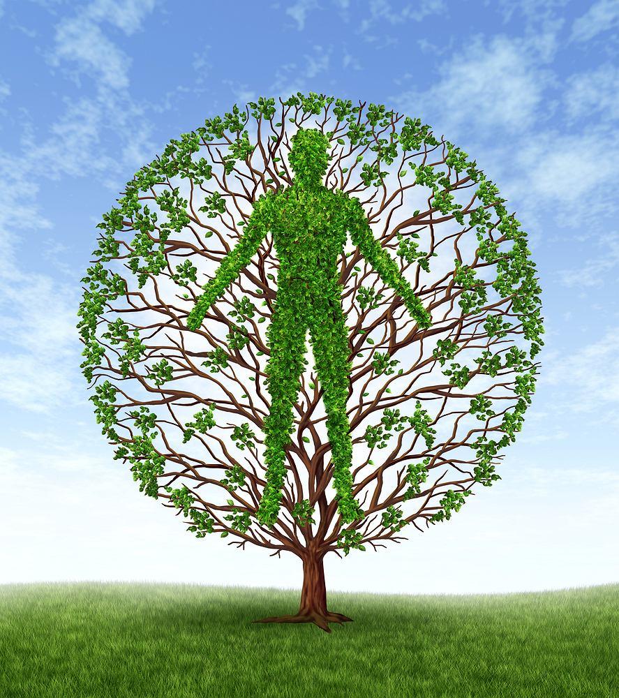 Hormon wzrostu jest wytwarzany przez przysadkę mózgową