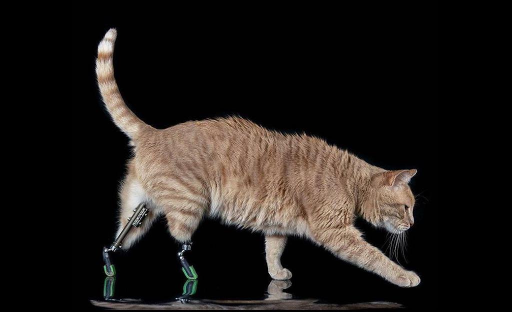 Vito, bioniczny kot