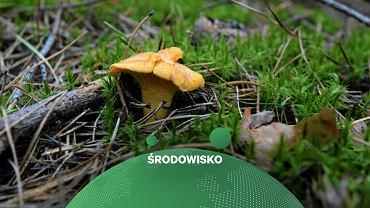Kurki w lesie (zdjęcie ilustracyjne)